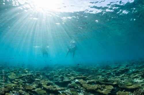 Atolli Sud Gaafu Dhalu