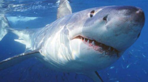 Australia: allerta squali, cancellata gara campionato mondo surf