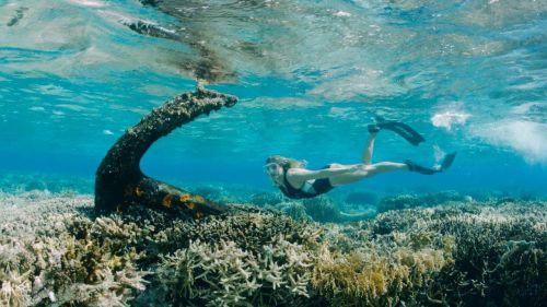 L'Ocean Film Festival in streaming fino al 31 dicembre
